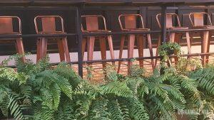 tropikalne rośliny